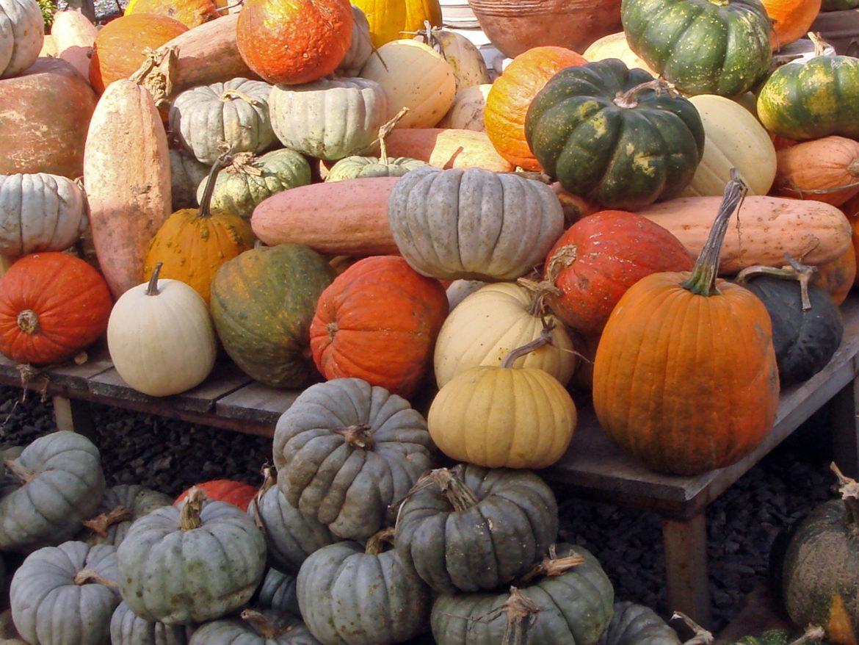 Immagine Zucca Di Halloween 94.Zucche Invernali Quale Si Usa Per La Festa Di Halloween